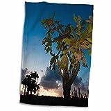 3dRose Danita Delimont - Succulents - Opuntia moniliformis, Succulent dry forest, Puerto Rico-CA27 MPR0054 - Maresa Pryor - 12x18 Hand Towel (twl_75321_1)