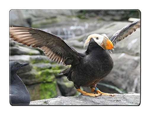 Liili Natural Rubber Placemat IMAGE ID: 902458 Tufted puffin