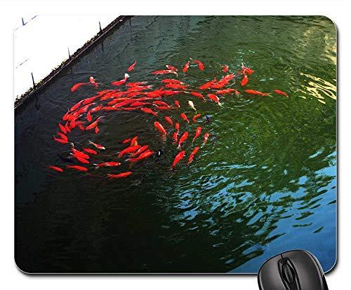Mouse Pads - Goldfish Fish Pond Pet Swim School Swirl