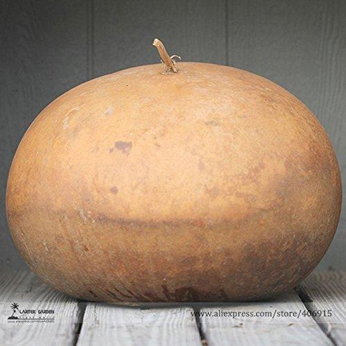 TopOne Sales Giant African Bushel Basket Gourd Lagenaria Siceraria Seeds, Professional Pack, 10 Seeds / ()