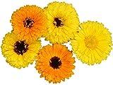 Calendula Fiesta Gitana Seeds Edible Heirloom Pot Marigold #21 (4800 Seeds)