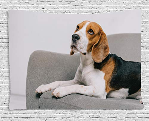 estry, Animal Themed Friendly Cute Dog Sitting on a Couch Professional Pet Photography, Wall Hanging for Bedroom Living Room Dorm, 60 W X 40 L Inches, Multicolor ()
