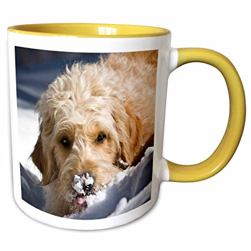 3dRose Danita Delimont - Dogs - A Goldendoodle dog - US32 ZMU0068 - Zandria Muench Beraldo - 15oz Two-Tone Yellow Mug - Us32 Finish