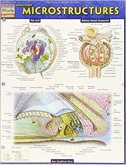 Anatomy: Microstructures (Quick Study Academic)