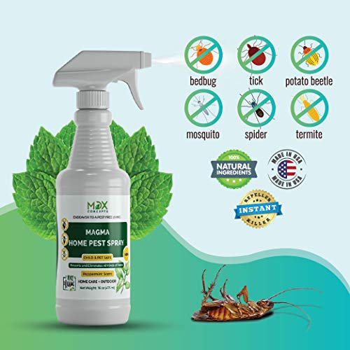 The Best Roach Killers [2020 Professional Review]