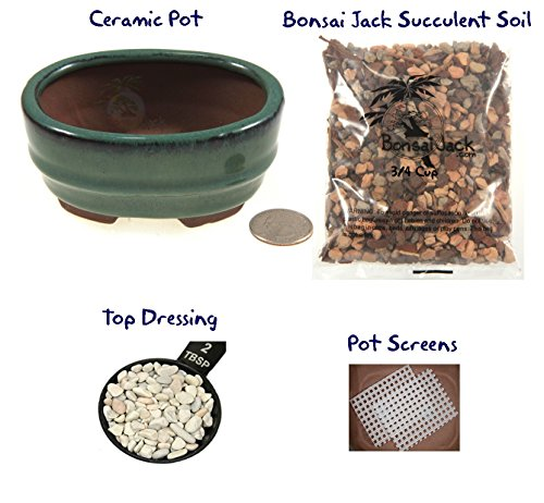Succulent Potting Kit(4 inch). Ceramic Bonsai Clay Pot, Soil, Screens and Top Dressing. 6 Pot Colors - Basil Green Oval