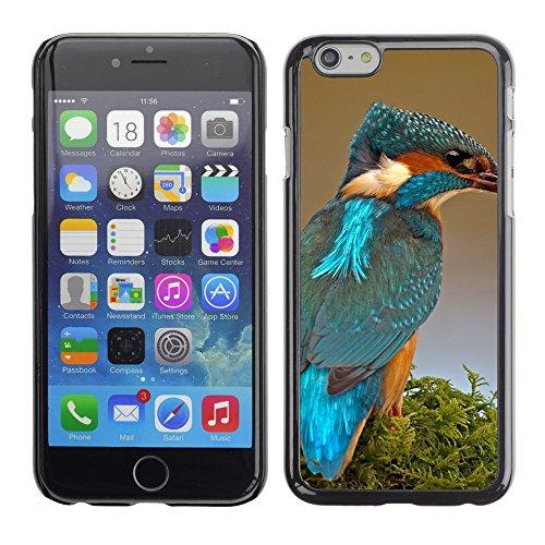 """Premio Sottile Slim Cassa Custodia Case Cover Shell // F00004060 oiseau coloré // Apple iPhone 6 6S 6G PLUS 5.5"""""""