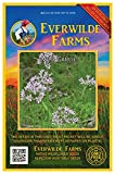 Everwilde Farms - 50 Wild Garlic Native Wildflower Seeds - Gold Vault Jumbo Seed Packet