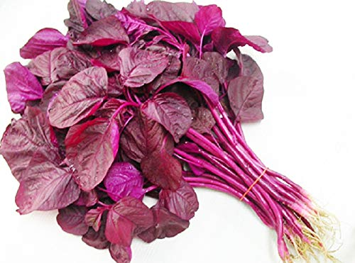 (Chinese Multicolor Leafy Greens Red Amaranth Seeds 3g for Planting Outside Door Cooking Dish Soup Salad Taste Delicious Harvest Days: 35days (Red Amaranth) )