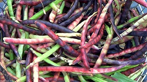 Pink Eyed Purple Hulled Cowpea (Vigna Unguiculata) AKA Southern Peas 200 Seed by wbut2023