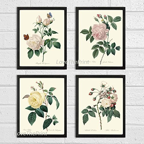 Botanical Print Set of 4 Antique Beautiful Redoute Roses Pink Yellow White Butterfly Garden Nature Plant Flowers Home Room Decor Wall Art (Butterfly Garden Framed Print)