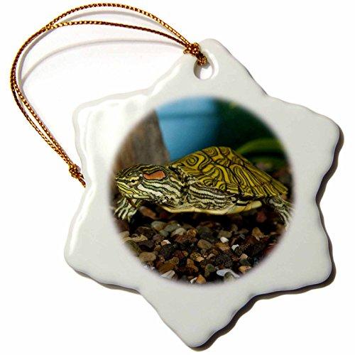 3dRose orn_84061_1 Ornate Red Ear Slider turtle NA02 DNO0772 David Northcott Snowflake Porcelain Ornament, 3-Inch (Sliders Red Ear)
