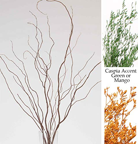 Green Floral Crafts Curly Willow Branches (Bunch of 8 Stems), 3-4Ft Tall, 3-Tone Brown & Caspia ()
