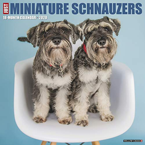 Just Miniature Schnauzers 2020 Wall Calendar (Dog Breed Calendar)