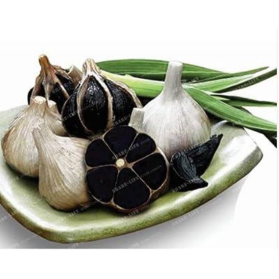 New Rare Black Garlic 100+ Seeds : Garden & Outdoor