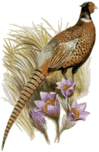 South Dakota State Bird (Ring-Necked Pheasant) and Flower (Pasque Flower) Counted Cross Stitch Pattern