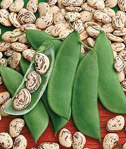 - Jackson Wonder Lima Bean Seeds [10 - Seeds]