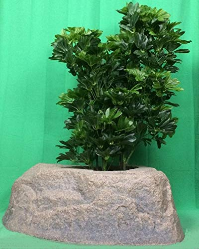 "Artificial UV Rated Outdoor 40"" Two Bush Schefflera Palm Tree with Lg Rock Planter Cover, by Silk Tree ()"