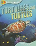 Turtles, Sally Morgan, 1595662065