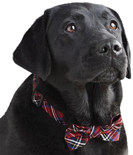 Orvis Holiday Dog Collar Small product image