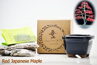 9GreenBox - Red Japanese Maple Bonsai Seed Kit- Gift - Complete Kit to Grow Dwan Red Wood Bonsai from Seed