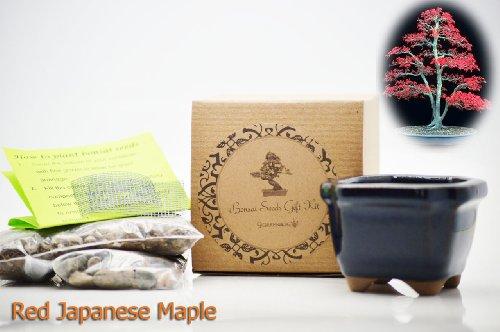 bonsai seed starter kit - 5