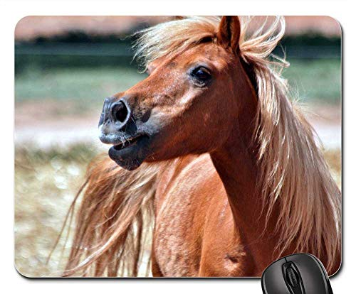 Mouse Pad - Shetland Chestnut Pony Gelding Animal Horse ()