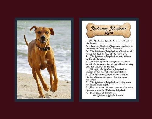- Dog Rules Rhodesian Ridgeback Wall Decor Pet Dog Saying Gift