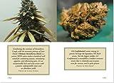 The Little Black Book of Marijuana: The Essential