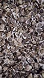 1 oz (Apx 100) Moringa Seeds - Paisley Farm and Crafts