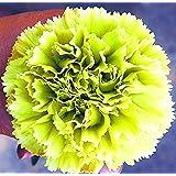 PlenTree Rare Hardy and Precious Bonsai, Professional Pack, 100 Pcs/Pack, New Modern Cut-Flower: 7