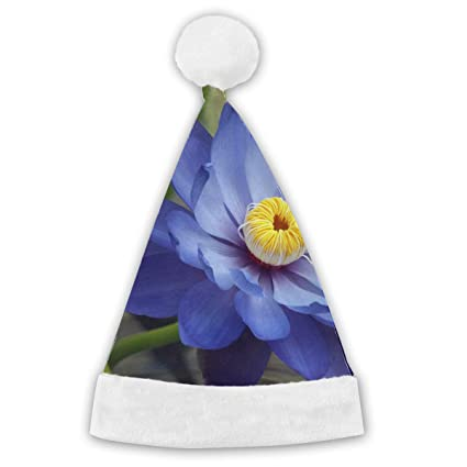 Amazoncom Blue Lotus Flower Meaning And Symbolism Red And White