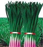 Plentree 100pcs Fresh Organic High-Yield Purple Root King Leek tuberosum Rottler Seas Bonsai Vegetables Seas sementes
