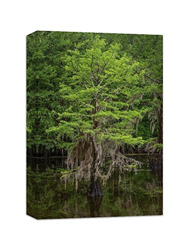 Tree Wall Art Nature Photography Canvas Gallery Wrap Print 'Spring Cypress Tree' by Nature's Vista Photography