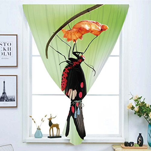 iPrint Blackout Window Curtain,Free Punching Magic Stickers Curtain,Swallowtail Butterfly,Amazing Moment Coming Out of Cocoon Chrysalis Transformation,Red Black Green,Paste Style,for Living Room