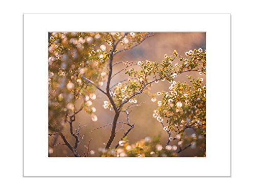 Pastel Bloom Floral Nature Botanical Art Photo 8x10 Matted (Matted Nature Picture Art)