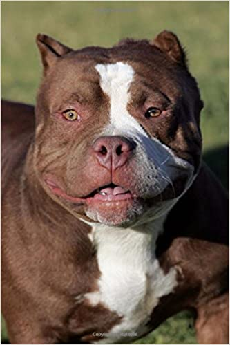 Amazon in: Buy Red Nose Pitbull Portrait Dog Journal Book Online at