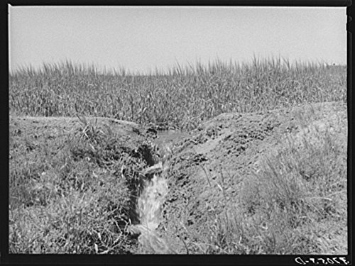 1940 Photo Excess water after irrigating field drains back into ditch and then goes onto near farm. The practice spreads weeds seeds although it does conserve water. Chamisal, New Mexico -