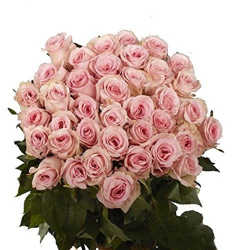 GlobalRose 50 Pink Roses- Beautiful Fresh Cut Flowers- Lovely Color Blooms