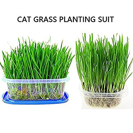 HEALTHY INDOOR AIDS DIGESTION GROW YOUR OWN Vitakraft CAT GRASS TRAY KIT X6