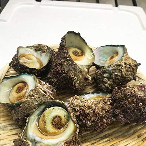 鳥取県産 冷凍 サザエ 1kg前後 さざえ 栄螺 浜下水産 産地直送 日本海産 山陰産