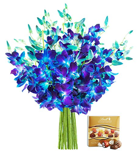 KaBloom Exotic Blue Sapphire Orchids: 20 Fresh Blue Dendrobium Orchids from Thailand without Vase and One Box of Lindt Chocolates by KaBloom