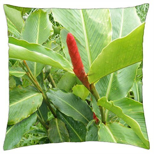 (Red flowers in St. Lucia Islands - Throw Pillow Cover Case (16)