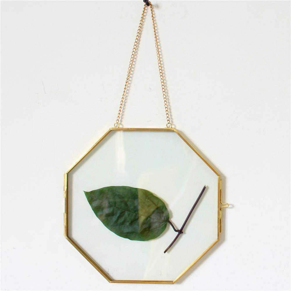 Lvpage libproqia Wall Hanging Brass Octagonal Tempered Glass Artwork Certificate Photo Picture Display Frame Geometric Ornament Plant Specimen Clip Modern Vertical Decor Card Holder (Gold)