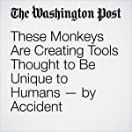 These Monkeys Are Creating Tools Thought to Be Unique to Humans—by Accident | Rachel Feltman