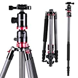 K&f Concept Carbon Fiber DSLR Tripod 4 Section 72 Inch Portable Tripods with Load Capacity 17.63 Ib Ball Head Quick Release Plate for Digital Camera DV