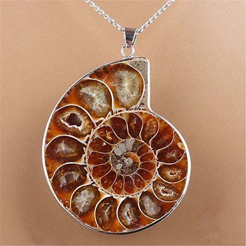 (Nautilus Ammonite Fossil Shell Necklace Natural Gemstone Madagascar Pendant)