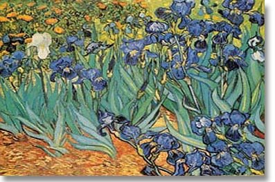Garden of Irises , c. 1889 Poster by Vincent van Gogh 36 x 2