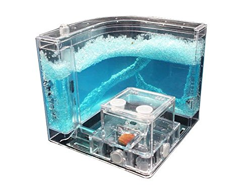 YueYueZou Ants Farm Kit, Translucent Ants Habitat Educational Gel