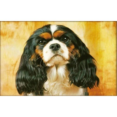 (Peyan Cavalier King Charles Spaniel Animal 5D Diamond Painting Kits Full Drill Crystal DIY Wall Sticker 3D Diamond Mosaic Cross Stitch Embroidery 18x14 inches)